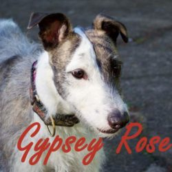 Gypsey Rose